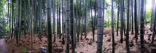 Kodaiji Bamboo, pano